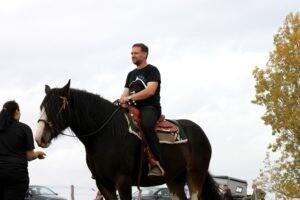 Shire Horse mit Westernsattel